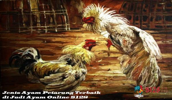 Jenis Ayam Petarung Terbaik di Judi Ayam Online S128