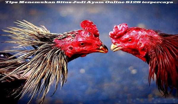 Tips Menemukan Situs Judi Ayam Online S128 terpercaya
